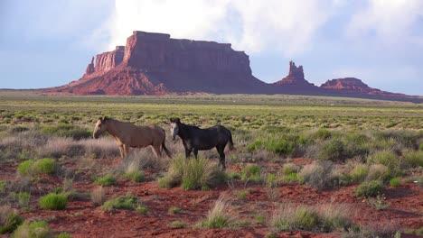 Los-Caballos-Pastan-Con-La-Belleza-Natural-Del-Valle-Del-Monumento-Utah-En-El-Fondo-9
