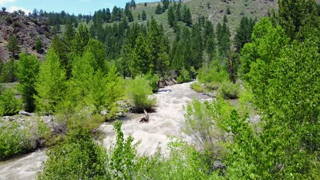 Aerial-shot-over-a-raging-Walker-River-in-the-Sierra-Nevada-Mountains-of-California