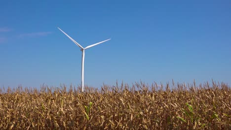 A-wind-turbine-produces-alternative-sources-of-electrical-energy-above-a-cornfield-in-Michigan