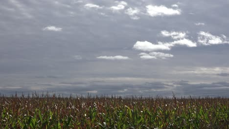 Time-lapse-shot-of-dark-clouds-moving-over-a-farm-cornfield-in-the-Midwest