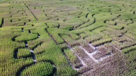 An-aerial-over-a-vast-corn-maze-on-a-Michigan-farm