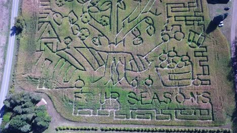 An-aerial-over-a-vast-corn-maze-on-a-Michigan-farm-1