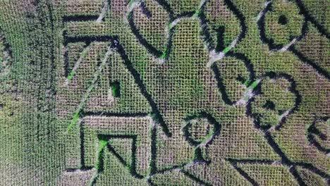 An-aerial-over-a-vast-corn-maze-on-a-Michigan-farm-2