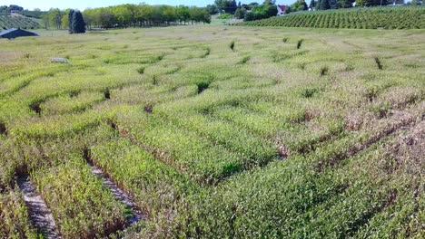 An-aerial-over-a-vast-corn-maze-on-a-Michigan-farm-3