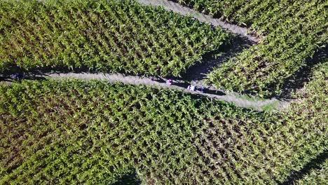 An-aerial-over-a-vast-corn-maze-on-a-Michigan-farm-5