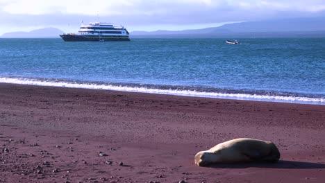 Un-León-Marino-Duerme-En-Una-Playa-De-Arena-Roja-En-Las-Islas-Galápagos-Con-Un-Barco-En-La-Distancia