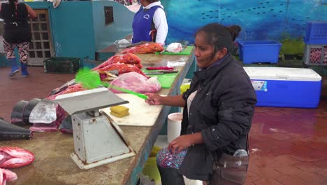 A-sea-lion-tries-to-steal-food-at-the-fish-market-in-Puerto-Ayora-Ecuador-Galapagos