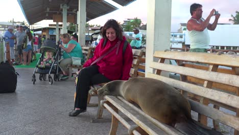 A-sea-lion-sleeps-on-a-bench-on-a-dock-surrounded-by-tourists-in-the-Galapagos-Islands-Ecuador