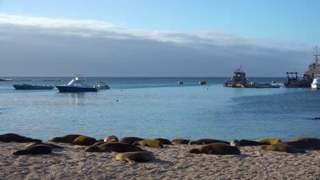 Dozens-of-sea-lions-lounge-on-the-beach-at-Puerto-Baquerizo-Moreno-harbor-the-capital-city-of-the-Galapagos-Islands-Ecuador-2