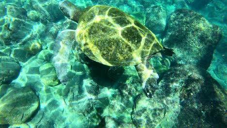 Beautiful-underwater-footage-of-a-sea-turtle-swimming-in-the-Galapagos-Islands-Ecuador-2