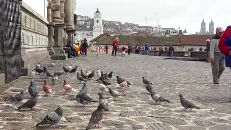 Pedestrians-walk-on-the-cobblestone-streets-of-Quito-Ecuador-with-pigeons-foreground