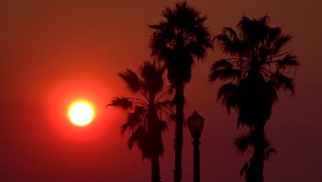 A-sunset-behind-palm-trees-in-Los-Angeles-California