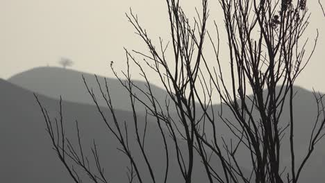 Burned-shrubs-and-bushes-from-the-Thomas-fire-with-two-trees-Ventura-city-landmark-in-distance