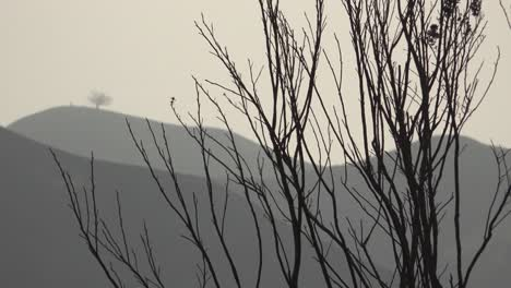 Burned-shrubs-and-bushes-from-the-Thomas-fire-with-two-trees-Ventura-city-landmark-in-distance-1