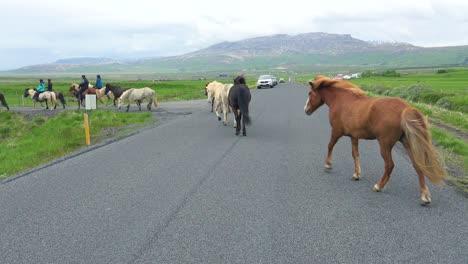 Islandia-Caballos-Pony-Y-Jinetes-Cruzar-Una-Carretera-En-Islandia