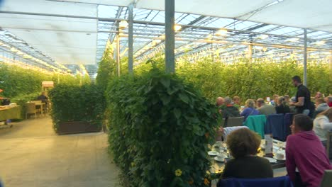 Interior-establishing-shot-of-an-Iceland-greenhouse-using-geothermal-hot-water-to-grow-fruits-and-vegetables-with-tourists-in-dining-room-1