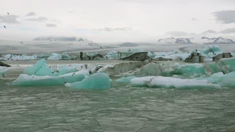 Icebergs-and-Arctic-tern-birds-in-a-river-in-the-frozen-Arctic-Jokulsarlon-glacier-lagoon-in-Iceland