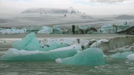 Icebergs-and-Arctic-tern-birds-in-a-river-in-the-frozen-Arctic-Jokulsarlon-glacier-lagoon-in-Iceland-4
