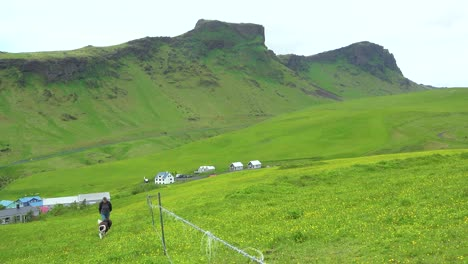 A-woman-farmer-and-her-dog-walk-in-green-fields-in-Iceland