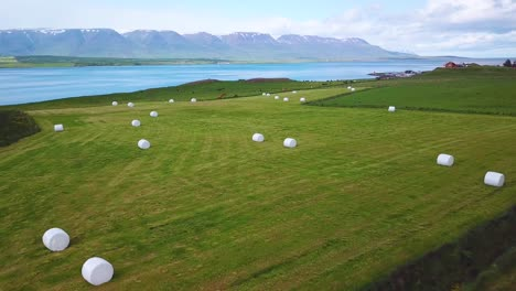 An-aerial-over-large-white-bales-of-hay-wrapped-in-plastic-cylinders-like-marshmallows-in-the-fields-of-Iceland