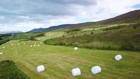 An-aerial-over-large-white-bales-of-hay-wrapped-in-plastic-cylinders-like-marshmallows-in-the-fields-of-Iceland-1