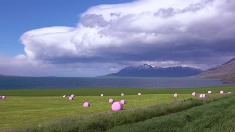 Large-pink-bales-of-hay-wrapped-in-plastic-cylinders-like-marshmallows-in-the-fields-of-Iceland