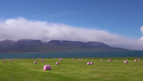 Large-pink-bales-of-hay-wrapped-in-plastic-cylinders-like-marshmallows-in-the-fields-of-Iceland-2