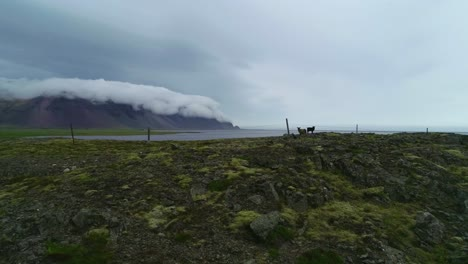 Stunning-aerial-shot-of-remarkable-beautiful-fjords-in-Iceland-with-clouds-and-fog-rolling-over-the-top-and-goats-in-foreground