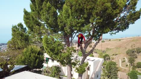 Aerial-of-a-tree-trimmer-cutting-branches-in-a-tree-in-a-hillside-neighborhood