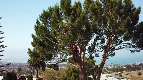 Aerial-of-a-tree-trimmer-cutting-branches-in-a-tree-in-a-hillside-neighborhood-2