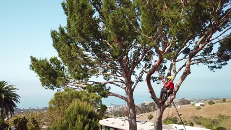 Aerial-of-two-tree-trimmers-cutting-branches-in-a-tree-in-a-hillside-neighborhood