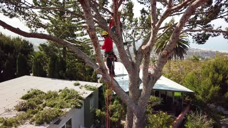 Aerial-of-two-tree-trimmers-cutting-branches-in-a-tree-in-a-hillside-neighborhood-1