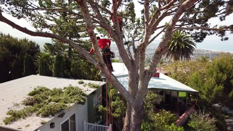 Aerial-of-two-tree-trimmers-cutting-branches-in-a-tree-in-a-hillside-neighborhood-2