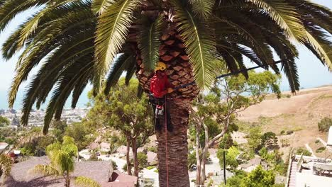 Aerial-of-a-tree-trimmer-cutting-palm-tree-fronds-on-a-southern-california-hillside-2