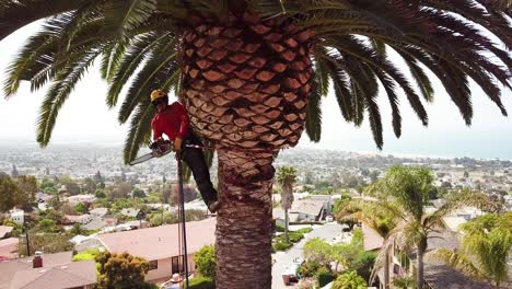 Aerial-of-a-tree-trimmer-cutting-palm-tree-fronds-on-a-southern-california-hillside-4