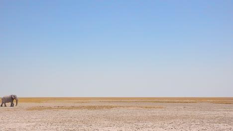 Una-Foto-Notable-De-Un-Elefante-Africano-Cruzando-Una-Llanura-Seca-En-El-Parque-Nacional-De-Etosha-Namibia