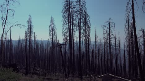 Burned-trees-and-snags-from-a-recent-forest-fire-in-the-High-Sierra-wilderness-of-Yosemite-National-Park-California