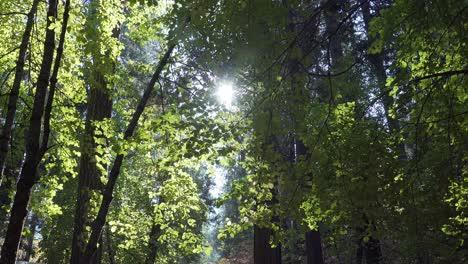Colores-Otoñales-Con-Retroiluminación-En-Un-Soleado-Día-De-Otoño-En-El-Valle-De-Yosemite-El-Parque-Nacional-De-Yosemite-California