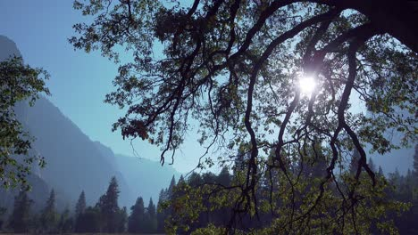 Scenic-shot-of-Yosemite-Valley-featuring-a-sunburst-a-silhouette-of-trees-and-rock-wall-formations-Yosemite-NP-CA