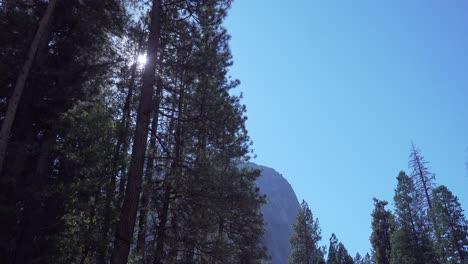 Una-Gran-Pared-De-Granito-Se-Eleva-Detrás-De-La-Luz-Del-Sol-A-Través-De-Un-Grupo-De-Altos-Pinos-En-El-Valle-De-Yosemite-Parque-Nacional-De-Yosemite-CA