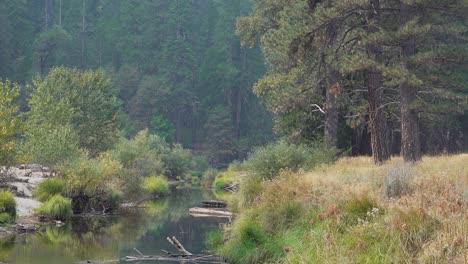 El-Río-Merced-Fluye-Suavemente-A-Través-Del-Valle-De-Yosemite-En-Un-Tranquilo-Día-De-Otoño-En-Otoño-El-Parque-Nacional-De-Yosemite-CA