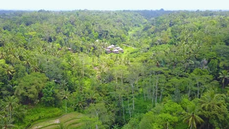 Aerial-over-vast-terraced-rice-paddies-near-Ubud-Bali-Indonesia-reveals-luxury-hotel-cabins