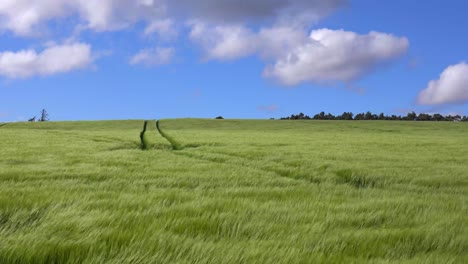 Wind-blows-across-beautiful-green-fields-in-the-countryside