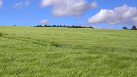 Wind-blows-across-beautiful-green-fields-in-the-countryside-1