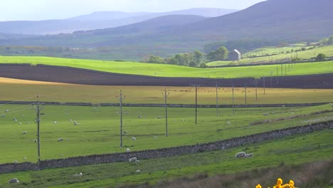 Beautiful-green-fields-in-the-Northern-Highlands-of-Scotland