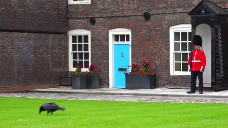 Beefeater-Guardias-Con-Cuervo-En-Primer-Plano-En-La-Torre-De-Londres-En-Londres-Inglaterra
