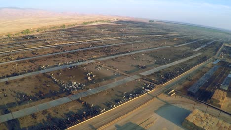 Aerial-over-a-vast-cattle-slaughterhouse-in-Central-California-1