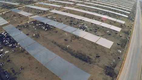 Aerial-over-the-pens-at-a-cattle-ranch-and-slaughterhouse-in-Central-California-1