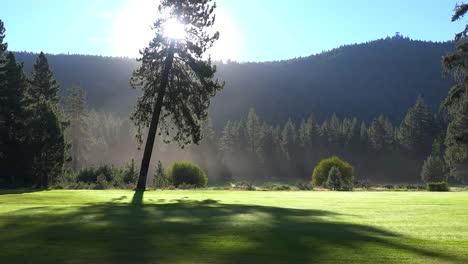 Morning-fog-shrouds-a-beautiful-pine-tree-at-sunrise