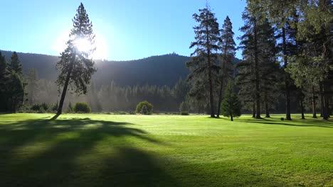 Morning-fog-shrouds-a-beautiful-pine-tree-at-sunrise-1